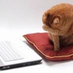 10 идей для наполнения Вашего блога